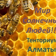 Тенториум (РДЦ 135 - Алматы) - Первая Пчеловодческая Компания!  группа в Моем Мире.