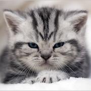 У кота внутри теплота group on My World