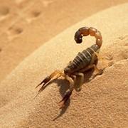***Scorpion***       on My World.