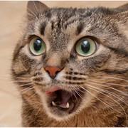 Cat  Wicked on My World.