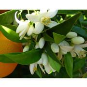 Ирина Журавлева on My World.