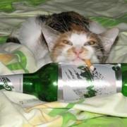 Пьяный Кот on My World.