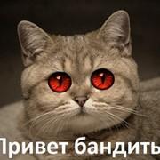 Алексей пи100лет on My World.