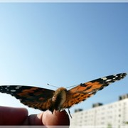 Moth *** on My World.